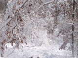 Sugar coated whiteness by aiced, photography->landscape gallery