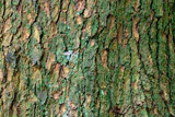 Bark Close-up by Ramad, photography->nature gallery