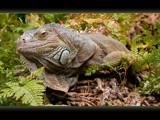 lizard #3 by kodo34, Photography->Reptiles/amphibians gallery
