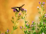 Balancing Act by photoimagery, Photography->Butterflies gallery