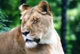 camera shy by dastpost, Photography->Animals gallery