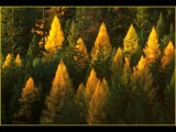 Fire in the Tree-Tops by photoimagery, Photography->Landscape gallery