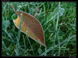 First Frost by Larser, Photography->Nature gallery