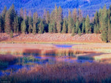 Yellowstone marsh with ducks. by BarnArt, Photography->Landscape gallery