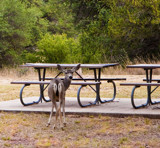 Come Picnic With Me by PatAndre, photography->animals gallery