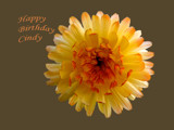 Happy Birthday Cindy ! by BernieSpeed, Photography->Flowers gallery