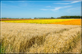 Flowering Fields by corngrowth, photography->landscape gallery