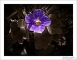 Garden Serenade.... by Roseman_Stan, photography->manipulation gallery