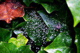 Shining Diamonds by braces, Photography->Nature gallery