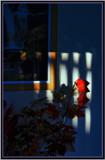 Evening shadows by biffobear, photography->still life gallery