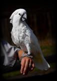 Black Pine Animal Sanctuary Visit 2014 #3 by tigger3, photography->birds gallery