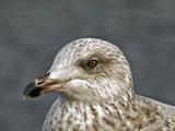 Worried by biffobear, photography->birds gallery