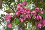 Flowering Tree by kidder, Photography->Flowers gallery