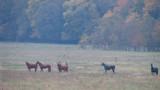 Three-Headed Horse by HylianPrincess1985, photography->animals gallery