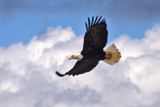eagle in the clouds by jeenie11, Photography->Birds gallery