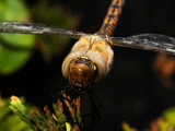 Macro Monsters (part VI) by Paul_Gerritsen, Photography->Insects/Spiders gallery