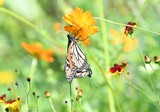 From Ruby's Garden Of Plenty #3 by tigger3, photography->butterflies gallery