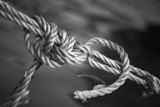 knot by JQ, Photography->Macro gallery