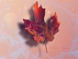 Autumn by nmsmith, Abstract->Fractal gallery