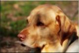 Dakota Pheasant Zapp'n Spence by tigger3, photography->pets gallery