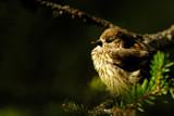 Sun Bath by MiLo_Anderson, Photography->Birds gallery