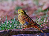 Enjoying the sun by biffobear, photography->birds gallery