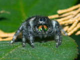 Wipe your chin by ryzst, photography->insects/spiders gallery