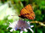 Summer memories by 89037, Photography->Butterflies gallery