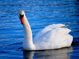 Elegance by braces, Photography->Birds gallery