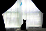 O, Who is that Kitty in the Window...? by emmalievds, Photography->Pets gallery