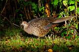 Mrs P by biffobear, photography->birds gallery