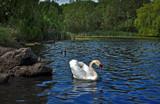 Top dog by biffobear, Photography->Birds gallery