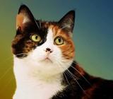 Betsy by JaiJoli, photography->pets gallery