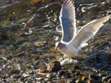 Eek! My Feet Are Wet! by barrken, Photography->Birds gallery