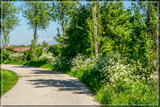 Cow-Parsley Lead-In by corngrowth, photography->landscape gallery