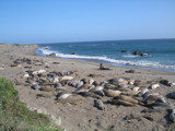Seals in San Simeon by frawgster, Photography->Animals gallery
