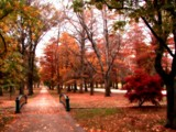 My Technicolor Autumn Dream by jojomercury, Photography->Landscape gallery