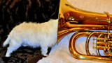 HMT - Her Masters Tuba by J_E_F, photography->pets gallery