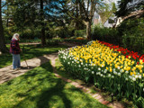 Tulip Bed by Pistos, photography->gardens gallery