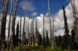 dead trees by ro_and, photography->landscape gallery