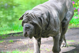 "She Said, ""Don't Worry, He's A Gentle Giant!!"" by braces, photography->pets gallery"