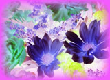 Floral Enchantment by TheWhisperer, photography->manipulation gallery