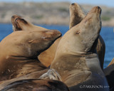 Communing with Pinnipeds by garrettparkinson, photography->animals gallery