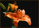 Orange You Glad!!! by jerseygurl, photography->flowers gallery