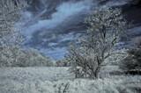 Tree by biffobear, photography->landscape gallery