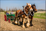 Working The Fields 1 by corngrowth, photography->animals gallery