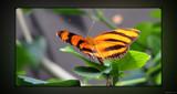 Flight Plan by Hottrockin, Photography->Butterflies gallery