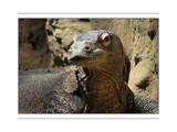 Noah's Ark 9 by Hottrockin, Photography->Reptiles/amphibians gallery