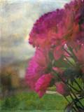 Flowers by the window Oil. by biffobear, photography->flowers gallery