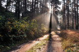 Forest footpath by ekowalska, photography->landscape gallery